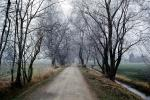 Tree lined road, dirt road, ditch, bare trees, VCRV16P09_03