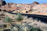 Yucca Plants, east of Las Vegas Nevada, Road, Roadway, Highway, Valley of Fire