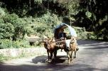 Cattle, jungle, road, Bhutan, VCVV01P15_06