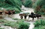 River Crossing, carts, Andapa, Madagascar
