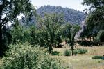 Feather River Railway, Oroville, 1963, trees, forest, woodland, 1960s, VRPV05P03_12