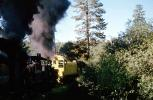Shay Locomotives, Feather River Railway, Oroville, trees, forest, woodland, 1963, 1960s, VRPV05P03_15