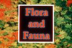 Flora and Fauna Title, WGTV02P05_09