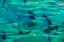 water texture, fish, tropical, Xel-Ha, Quintana Roo