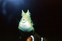 Cowfish, eyes, AAAV03P11_17