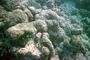 Coral Reef, Solomon Islands, AAKV02P06_19