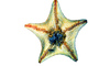 starfish, photo-object, object, cut-out, cutout