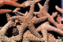 starfish textures, backgrounds