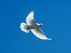 dove, Equanimity