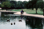 Duck, pond, lake, path, ripples, Wavelets, ABWV01P04_08