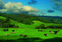 Cow, Marin County, California, ACFV02P14_18