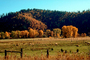 sheep, fence, Quincy, California, autumn, ACFV03P01_02.4099
