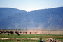 Grazing Cows, Klamath, Oregon, Beef Cows