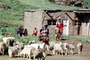 Goats, Sheep, Family, home, house, building, ACFV03P13_19