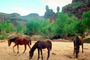 Horse, trees, geoform, Supai