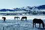 Southern Colorado in the Winter, Horses, AHSV02P04_15