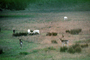 White Deer of Point Reyes, AMAV01P07_01