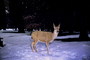 Deer in the Snow, AMAV01P08_15