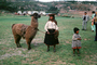 Llama, (Lama glama), Woman, Child, AMLV01P10_02