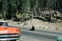 Bear sits on the road, Feeding the Bear, Dangerous Behavior, cars, automobiles, vehicles, 1950's, AMUV01P10_02
