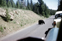 Feeding the Bear, Dangerous Behavior, Cars, 1950's, AMUV01P12_02