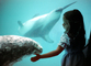Girl with a Seal, Seal Underwater, aquarium, AOSV01P01_17