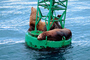 Seals basking on a Navigation Buoy