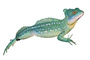 Basilisk Lizard, photo-object, object, cut-out, cutout, (Basiliscus plumifrons), Iguania, Corytophanidae, corytophanid