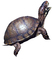 Box Turtle, (Terrapene carolina), Emydidae, photo-object, object, cut-out, cutout, ARTV01P02_19F