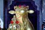 Sacred Cow, gold, Holy, Statue, deity, Mt. Abu, CAIV03P14_14