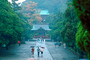 The Temples in the Rain, Shrine, Forest, people with umbrellas, Kamakura, CAJV02P07_16.3338