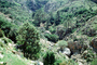 forest, hill, mountain, building, home, trees, steep, CEFV06P09_17
