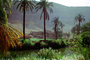 Nile River Valley, Palm Trees