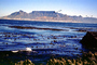 Ocean, Shoreline, Seaweed, Mountains, Table Mountain National Park, Cape Town, CKFV01P06_02