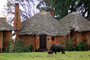 Water Buffalo, Huts, Tree, Hills, Cottages, Buildings, Hotel, Thatched Roof, roundhouse, CKTD01_009