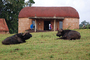 Water Buffalo, Huts, Tree, Hills, Cottages, Buildings, Glamping, CKTD01_011