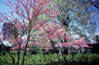 Lincoln Park Zoo, trees, path, pathway, blossom, spring, springtime, sunny, outside, outdoors, CLCV08P07_10