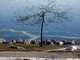 Bare Tree, Frozen Lake Michigan, Manitowoc, CLWD01_006