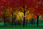 Autumn, Deciduous Trees, Fall Colors, Twilight, Dusk, Dawn, Night, Nighttime, Exterior, Outdoors, Outside, CMMV01P07_11.1821