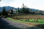 St. Clement Vineyards, St. Helena, CNCV01P10_07