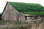 Barn Building, rural, sod roof, grass, CNCV05P14_19