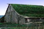 Barn Building, rural, sod roof, grass, CNCV05P15_01