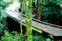 wooden bridge, Mill Valley, Marin County, CNCV06P11_16