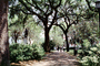 General James Oglethorpe Statue, walkway, hanging moss, trees, Chippewa Square, Historic Savannah, COGV01P13_03