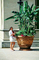 Oversize plant, Pot, Banana Plant, Biltmore Estate, Asheville, North Carolina, CORV01P12_18