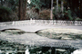 Footbridge, reflection, swamp, Magnolia Plantation, Charleston, Thomas Drayton, wetlands, COSV01P03_19