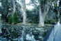 Footbridge, reflection, swamp, Magnolia Plantation, Charleston, Thomas Drayton, wetlands, COSV01P04_05