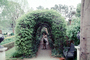 Ivy Covered Atrium, path, walkway, tunnel, bushes, Williamsburg, COVV01P09_14