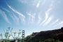 Cirrus Clouds, Golden Gate Bridge, CSFV02P08_14