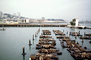 Pier-39, Docks, Harbor Seals, Forbes Restaurant, CSFV16P15_10